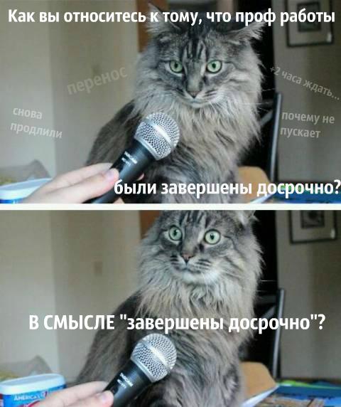a-vy-v-kurse-chto-kot-s-microfonom.jpg